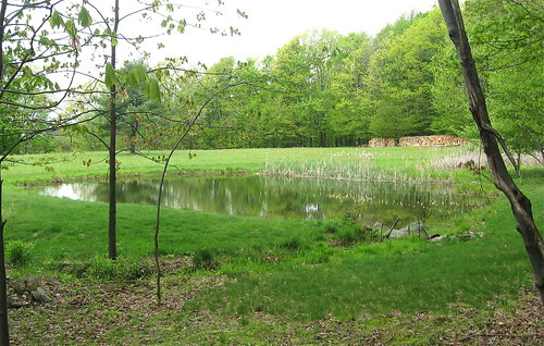 Winney Hill pond