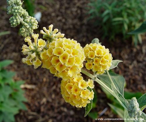 HoneycombFC