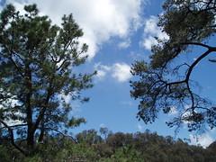 PC100206 (Blake the Black) Tags: tasmania tassie launceston cataractgorge