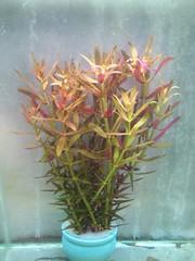 Thủy Sinh Tuấn Anh-Chuyên cây & Rêu Thủy Sinh, Cá Cảnh Biền & Hồ Cá Cảnh Biển - 34