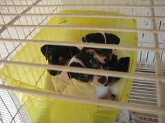 Bucket full of puppies