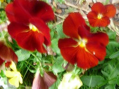 Abundance (Bella the Cat) Tags: camera red plants leaves digital garden petals bright vivid panasonic foliage thorns lumin undergrowth bloodred
