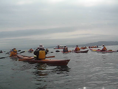 Lots of Kayaks 2