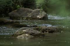 TMK5D0708 3011 (TLAfoto) Tags: naturaleza rio navarra salazar