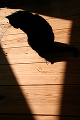 noir (jana shea) Tags: sunlight silhouette cat chat noir kitty woodenfloor kleinepoes