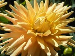 yellow cloud of beauty