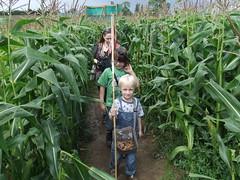 Maize Maze (4)