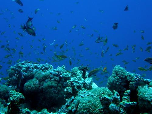 Explosión de vida en el Mar Rojo