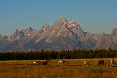 Grand Teton and Horses (CCBImages) Tags: horses wyoming grandteton grandtetonnationalpark ©ccbimagescom