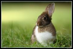 Coniglietto (Cisone (Emilio Crea)) Tags: rabbit bunny conejo breathtaking lapin hase kaninchen krolik fpg platinumphoto anawesomeshot impressedbeauty goldstaraward breathtakinggoldaward artofimages bestcapturesaoi aboveandbeyondlevel1 aboveandbeyondlevel2