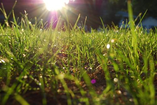 Grassy grass grass...