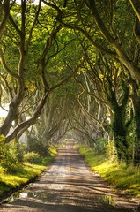 Dark Hedges (Chris Tait) Tags: trees ireland beach dark northern hedges stranocum vosplusbellesphotos