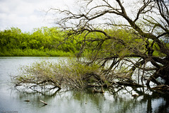 River (sleepingwithmonsters) Tags: trees nature water river alone quiet canberra molongolo