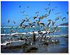 Pescador de Aves (Errlucho) Tags: