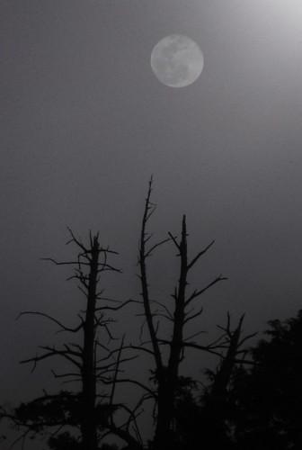 月亮太暗了