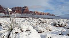 Winter Storm, Vermilion Cliffs, AZ (ebuechley) Tags: az wintersnow vermilioncliffsarizona