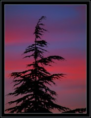 lonely Christmas tree (maios) Tags: christmas travel blue sunset red sky sun colour tree nature water greek photo europa europe flickr tramonto photographer hellas greece macedonia thessaloniki lonely merry fotografia salonica manikis maios iosif  heliography    abigfave     goldstaraward         iosifmanikis
