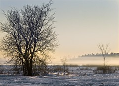 Winter Fog (riclane) Tags: christmas morning winter ontario canada cold fog sunrise ottawa scene diamondclassphotographer flickrdiamond