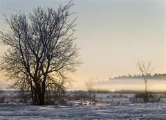 Winter Fog (riclane) Tags: christmas morning winter ontario canada cold fog sunrise ottawa scene diamondclassphotographer flickrdiamond