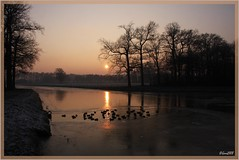 31dec08 : last day of the year......I wish all my friends a happy new year ! (guus timpers) Tags: winter sunset ice zonsondergang ducks twente ijs eenden almelo wak loolee lolee