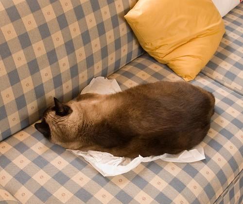 Tissue paper cat