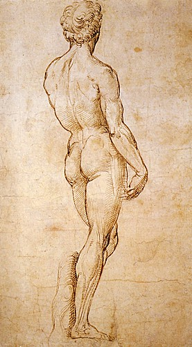 1508  Raphael    A back view of Michelangelo's David  Pen and Brown Ink  39,6x21,9 cm  Londres, British Museum