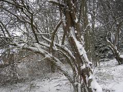 Delph Snow 11