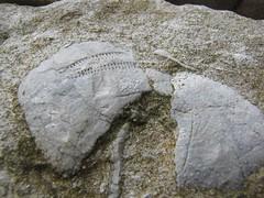 Casa del Re: una pietra di un muretto..