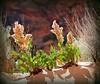 Sand Flowers (carfull...home in Mongolia) Tags: utah sandstone scenery desert redrock snowcanyon