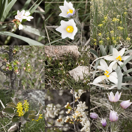 Horsetooth Mountain Wildflowers