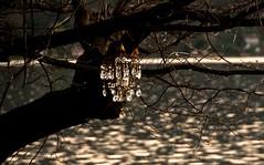 frutti (Lace1952) Tags: primavera nikon tramonto albero acqua riflessi frutti d300 lagoorta