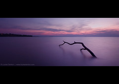 (Louise Denton) Tags: ocean longexposure sunset sea tree beach waves branch nt australia darwin le trunk mindilbeach 20seconds bulbmode