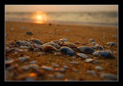 Sea shells on the seashore [#495] (Ajith ()) Tags: sunset sea fab seashells photography dof depthoffield shore u coloured soe clicks ajith naturesfinest naturescall supershot flickrsbest totalawesomeness platinumphoto impressedbeauty superbmasterpiece diamondclassphotographer flickrdiamond excellentphotographerawards onlythebestare fiveflickrfavs ajithkumar theperfectphotographer treeofhonor showmeyourqualitypixels flickrbestpics ajithu uajith colouredclicks ajithphotography ajithuuphotography ajithuphotography colouredclickscom coloredcicks coloredclicks ajithuwordpresscom ajithkumaru