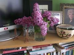 Lilacs--4-9-08 003