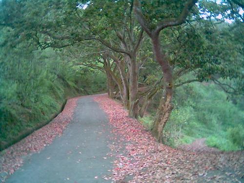 漫步紅葉步道