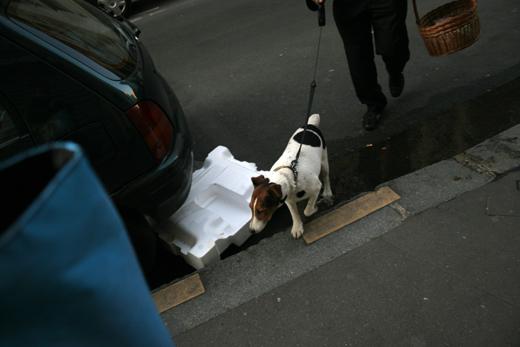6_mai_2008_chien_8885