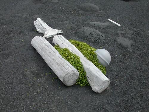 Surtsey Driftwood 2004