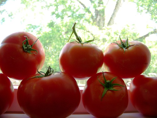 Tomatoes ripening on the sill