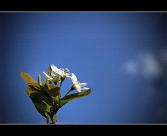 Light and Life (Louis Lalibert Photographie) Tags: flower art texture fleurs photoshop nikon bravo bluesky exploration hdr artistique cielbleu artisticshot visiongroup nikond40x louislalibertphotographie