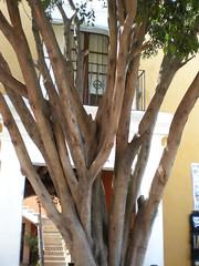 Puebla streetscene (sftrajan) Tags: tree mexico mexican mexique puebla streetscape mexiko messico angelopolis puebladelosangeles puebladezaragoza