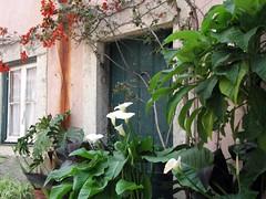 closed (Graa Vargas) Tags: door portugal window lisboa lisbon graavargas janelasportuguesas 2008graavargasallrightsreserved 8403030510