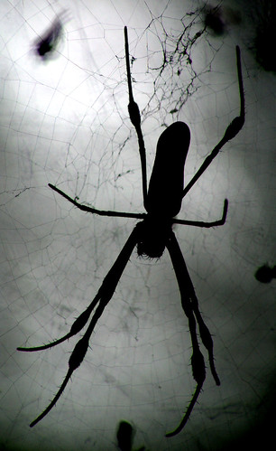 Ominous Spider