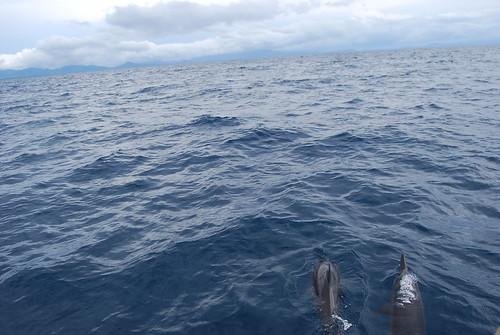 mag-inabg dolphin