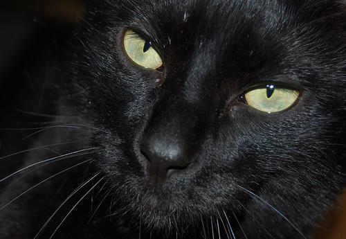 b - Cat's face