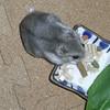 ミートジャーキーを食べるコーキ