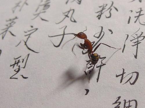 超大螞蟻1
