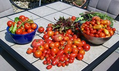 End-Of-Summer Haul (yummysmellsca) Tags: pink red food plants house ontario canada home vegetables garden table beans backyard gardening tomatoes august bowl andrew fresh vegetarian blogging beets peppers carrots local growing organic homegrown colander labourday foodtv oshawa sanmarzano seive gardenproject2008