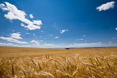 Oregon Wheat Fields (#12 of 25) (absencesix) Tags: travel blue sky plants usa nature colors field weather clouds oregon iso100 unitedstates wheat july noflash northamerica agriculture 1020mm 2008 locations locale 10mm somwhere lightbrown canoneos30d camera:make=canon exif:make=canon exif:iso_speed=100 geo:state=oregon apertureprioritymode july272008 hasmetastyletag naturallocale summer2008travel sigmaexdg10204056 haslenstype selfrating4stars exif:focal_length=10mm 1320secatf11 geo:countrys=usa exif:lens=100200mm exif:model=canoneos30d camera:model=canoneos30d exif:aperture=11 subjectdistanceunknown geo:city=somwhere somwhereoregonusa