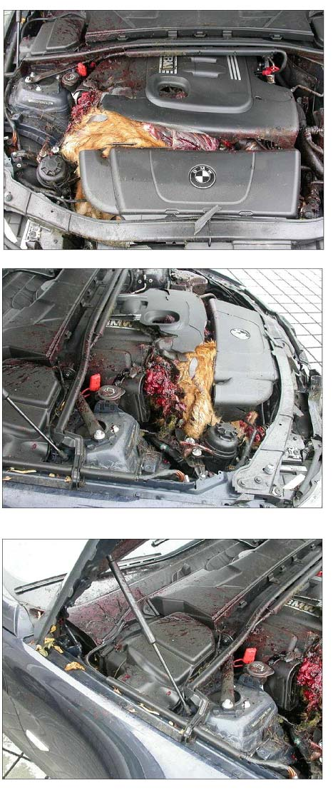 Omg Deer Meets Bmw 140mph Need I Say More