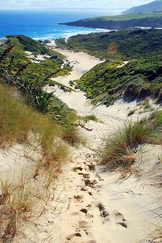 sandfly beach